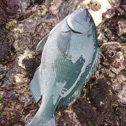 Fishing KOCHI